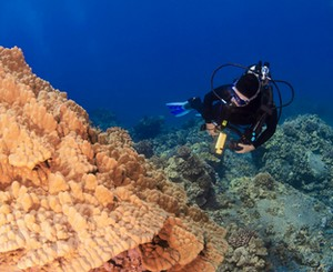 scuba diver looking at coral in Hawaii