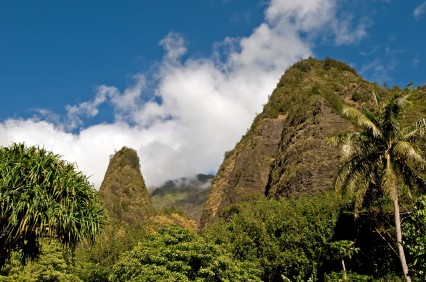Picture of jungle treetops and Iao Needle in Iao Valley State Park.