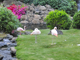 Pink flamingos at the Hyatt Regency Maui