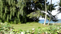 Picture of ocean view through trees in Kapalua, Maui, Hawaii.