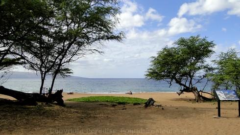 Picture of kiawe trees at Poolenalena Beach in Wailea-Makena, Maui.