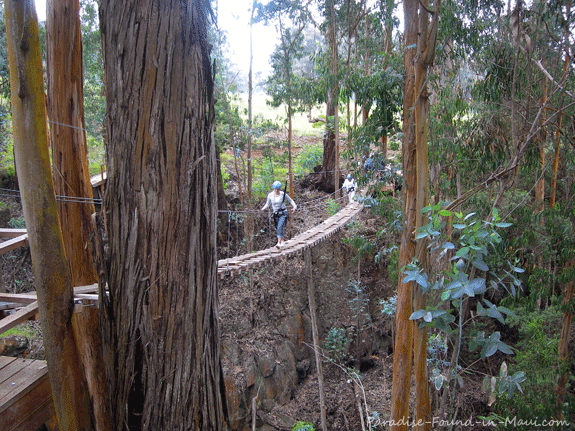Suspension Bridge on Haleakala zipline course with Maui's Skyline Eco Adventures