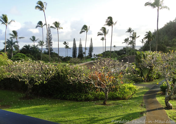 Tropical Landscaping and Ocean View