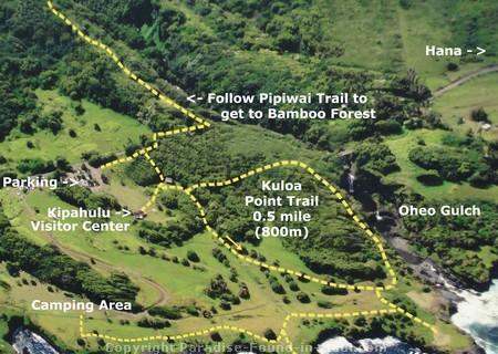 Maui S Bamboo Forest Hike Along The Pipiwai Trail