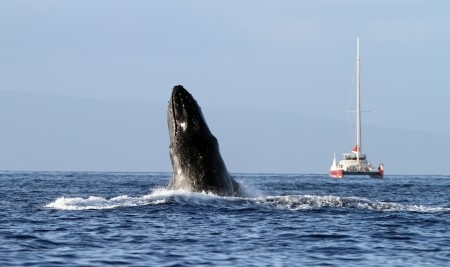 Catamaran Maui whale watching tours