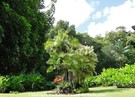 Picture of the grounds of a tropical flower farm near Hana, Maui.