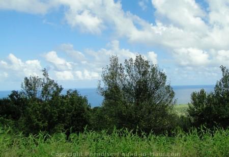 Picture of macadamia nut farm