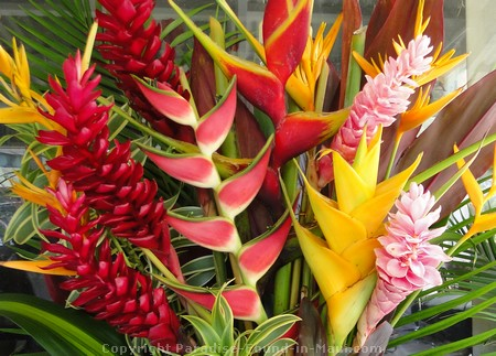 Picture of a tropical flower boquet.