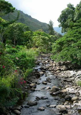 picture of Iao Stream in the Maui Iao Valley State Park