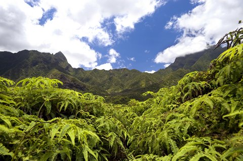 Picture of Iao Valley State Park treetops.