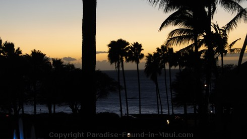 Picture of a Maui, Hawaii sunset through the palm trees.