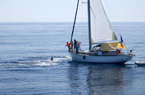 Whale watching in Maui aboard a sailboat.
