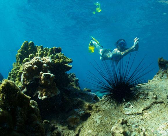 Snorkeling at the island of Lanai, Hawaii