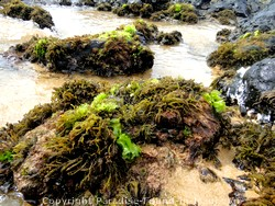 Picture of tide pools at Ulua Beach, Maui, Hawaii.