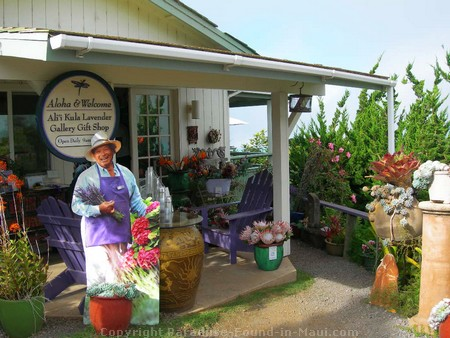 Picture of Upcountry's Alii Kula Lavender Farm giftshop.