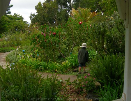 Picture of Kula Botanical Gardens.