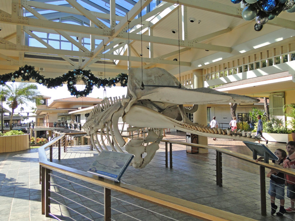 Whale Skeleton at Shopping Center on Maui