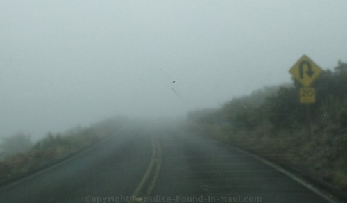 Fog on Crater Road