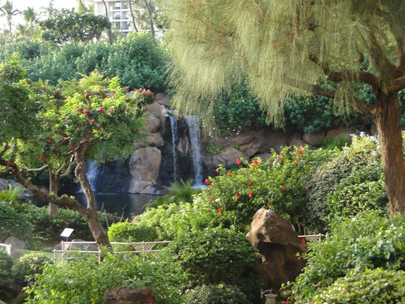 Tropical Landscaping at the Hyatt