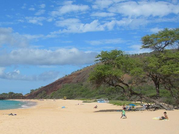 Kiawe Tree at beach in Maui Hawaii