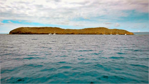 Snorkel tours at Molokini Crater