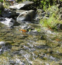 Picture of stream crossing at Puaa Kaa along the road to hana on the island of maui hawaii