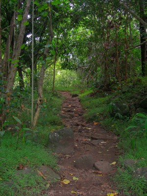 Hiking for free in Iao Valley State Park