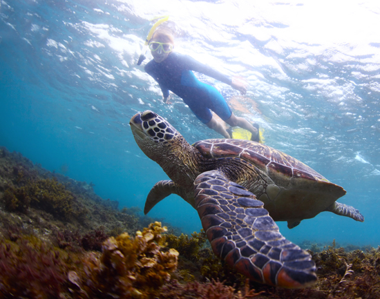 wear a wetsuit at Molokini