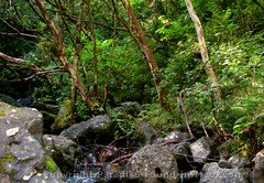 Picture of tropical greenery along the Pipiwai Trail, Maui, Hawaii