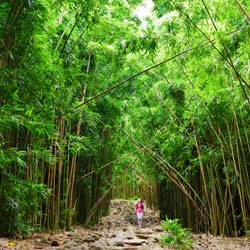 Mauis Bamboo Forest Hike Along The Pipiwai Trail