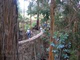 A Maui adventure on a suspended bridge