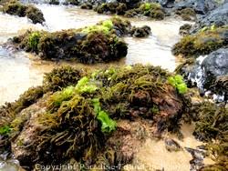 Picture of tide pools at Ulua Beach, Maui, Hawaii.